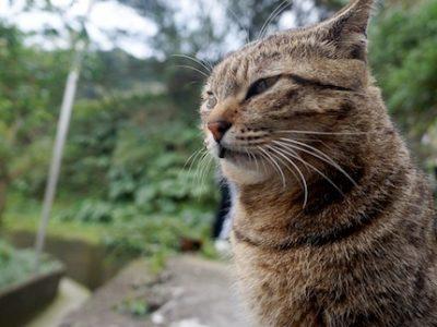 L'association Cosa Animalia en quête de bénévoles pour les chats et les pigeons de Grenoble
