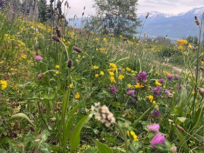 Plantes à Fleurs.  © C. Terrasson