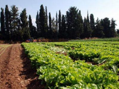 Une agriculture agriculteur champ
