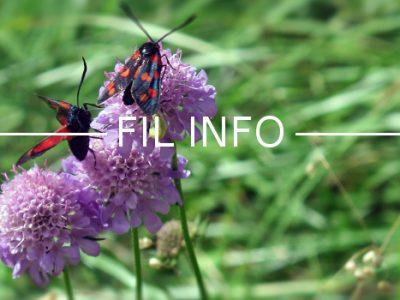 filinfo-environnement-fleurs-insecte-biodiversite