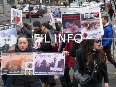 L'association de défense des animaux Cali fait circuler une pétition demandant au maire de Grenoble d'interdire les cirques avec animaux sur son territoire.