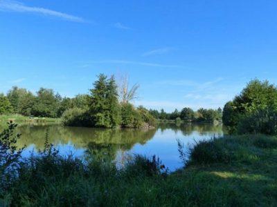 Le Département de l'Isère veut préserver les étangs... et développer une filière poisson